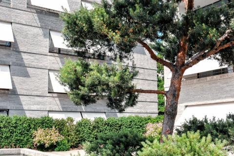Pflanzplanung-Landschaftsarchitektur-Wohnüberbauung-Innenhof-Pinus