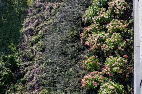 kleingarten-an-terrasse-thalwil-1